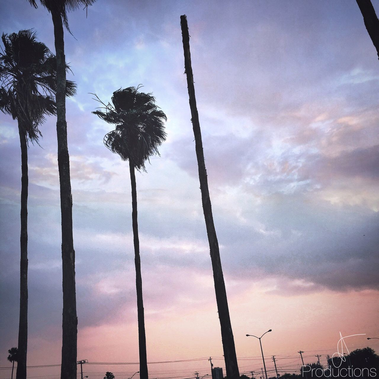 sky, nature, beauty in nature, cloud - sky, growth, palm tree, low angle view, outdoors, flower, no people, tranquility, tree, tree trunk, sunset, scenics, day
