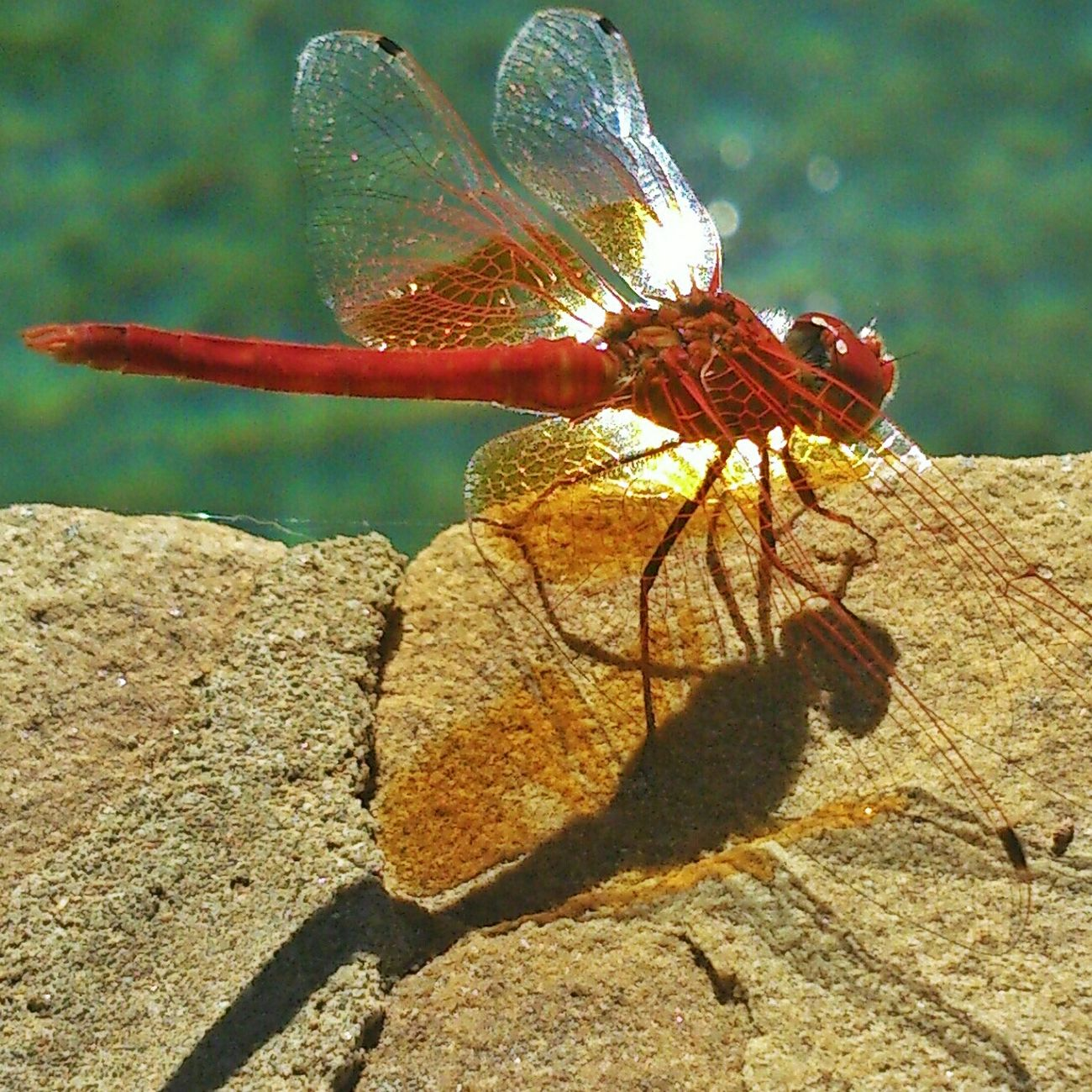 Dragonfly Natgeo Mobilephotography AMPt Community