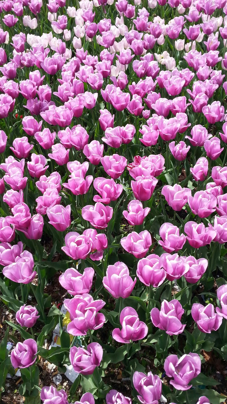 Flowers Flowers Wien Pure Beauty New Reality YMO Hello World Check This Out Taking Photos