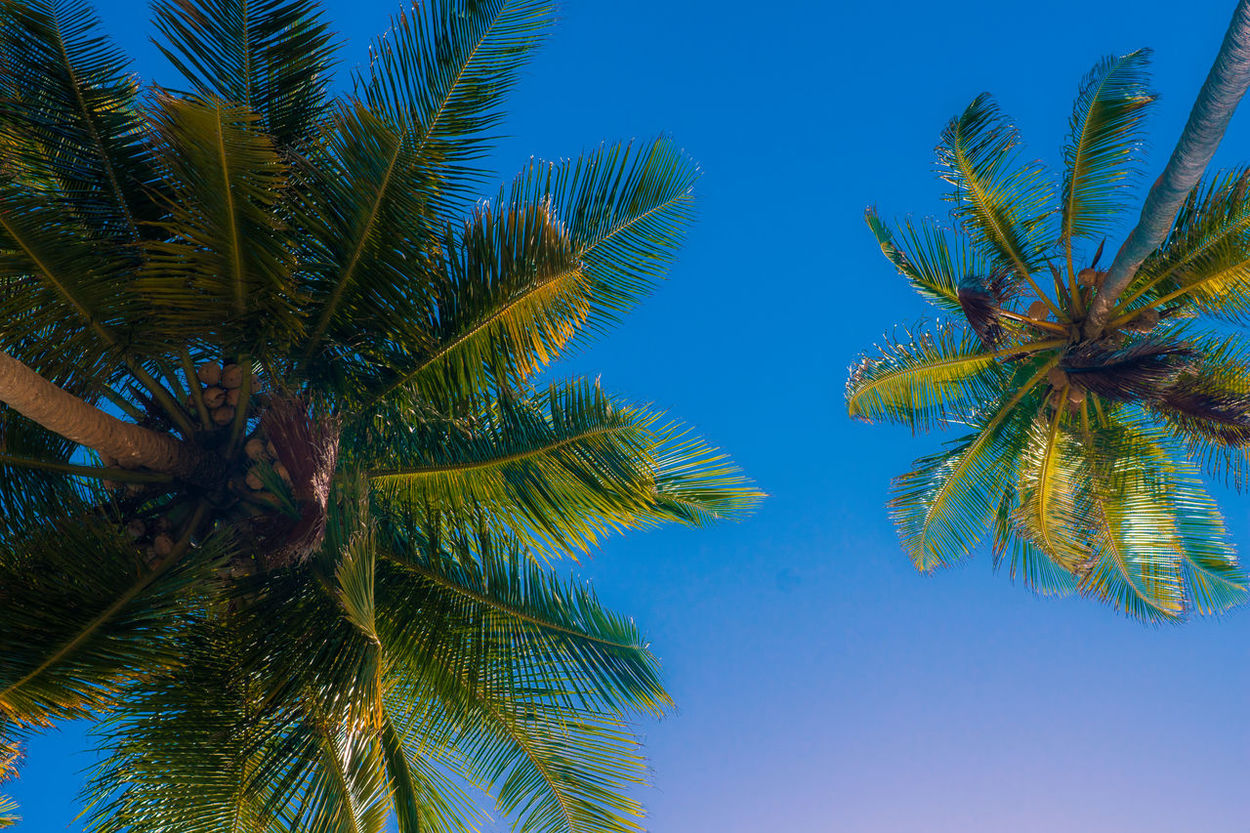 #Chillin #good Weather #summer #tranquillity #travel #tropical #Vacation Beauty In Nature Blue Clear Sky Close-up Day Frond Growth Low Angle View Nature No People Outdoors Palm Frond Palm Leaf Palm Tree Sky Tree Tree Trunk Sommergefühle