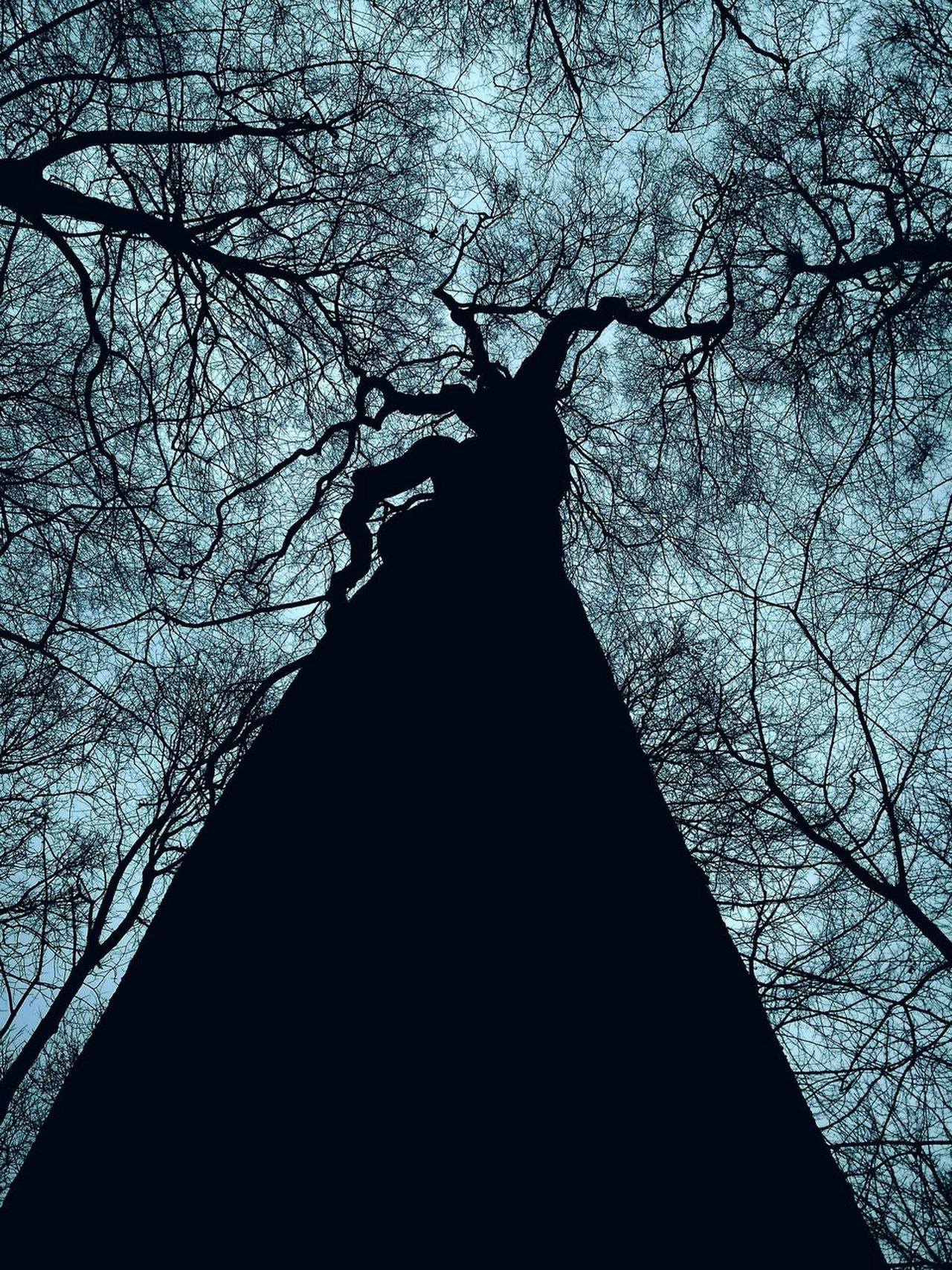 Welcome To Black Tree Silhouette Low Angle View No People Nature Outdoors Reedited
