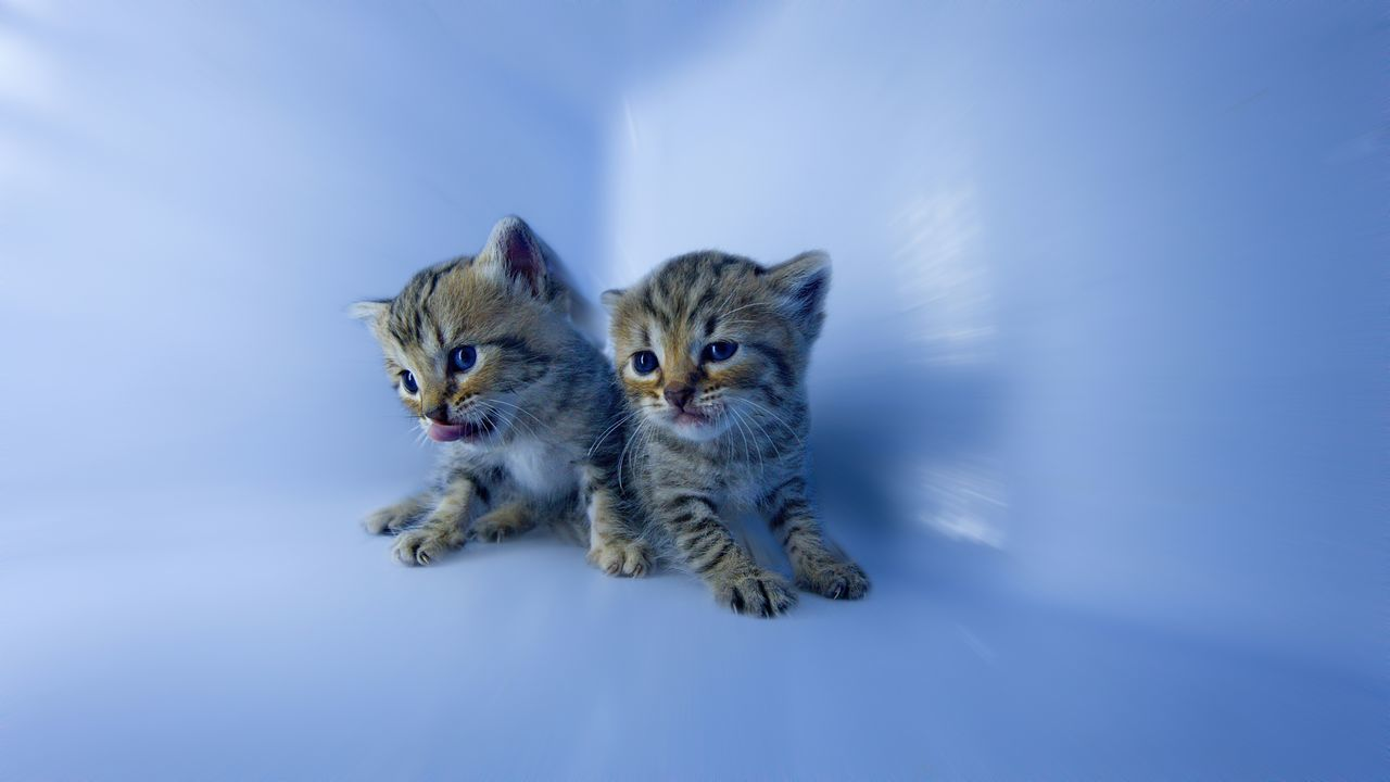 Beautiful stock photos of baby katzen, Animal Themes, Blue, Close-Up, Cute