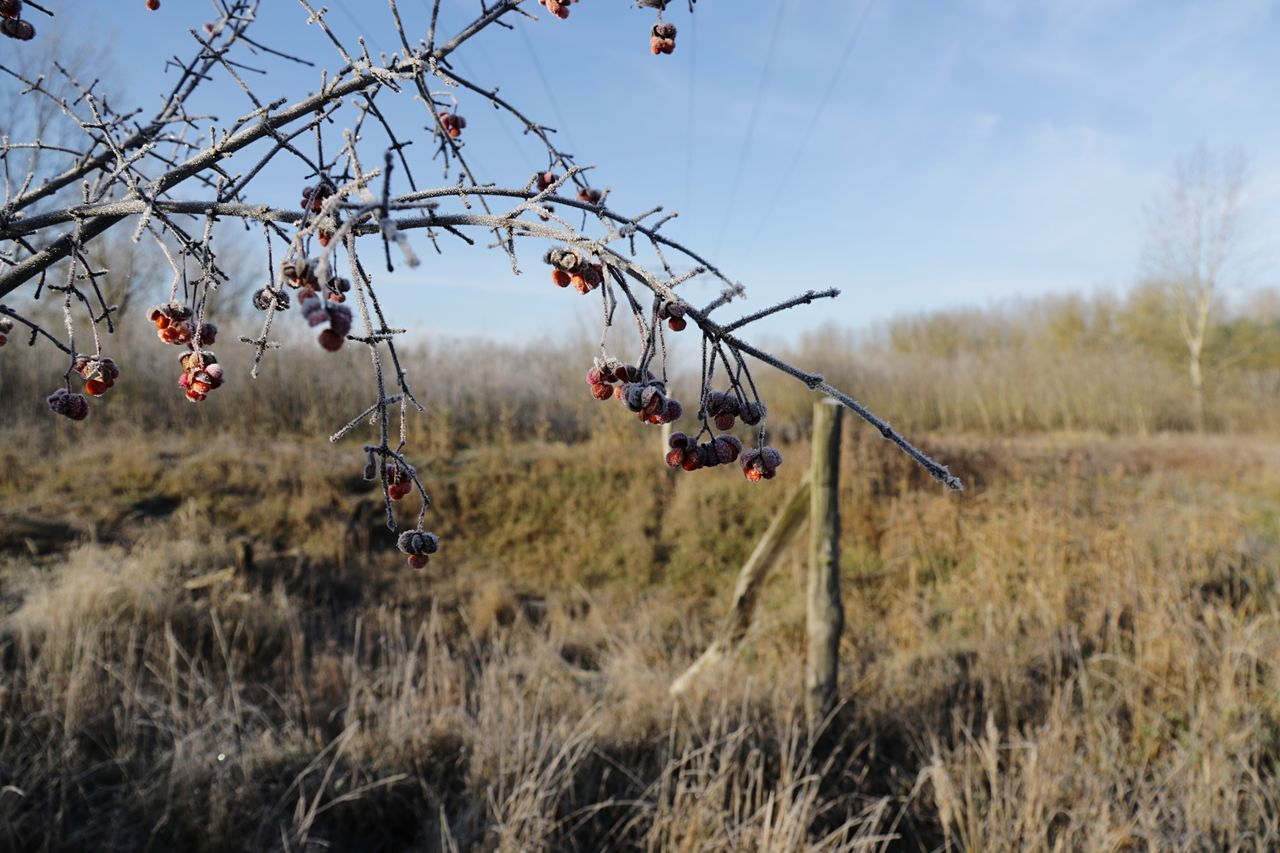 Tree Sky Outdoors Day Nature Growth Scenics Landscape No People Grass Beauty In Nature Rose Hip Rose Hips Rosehips