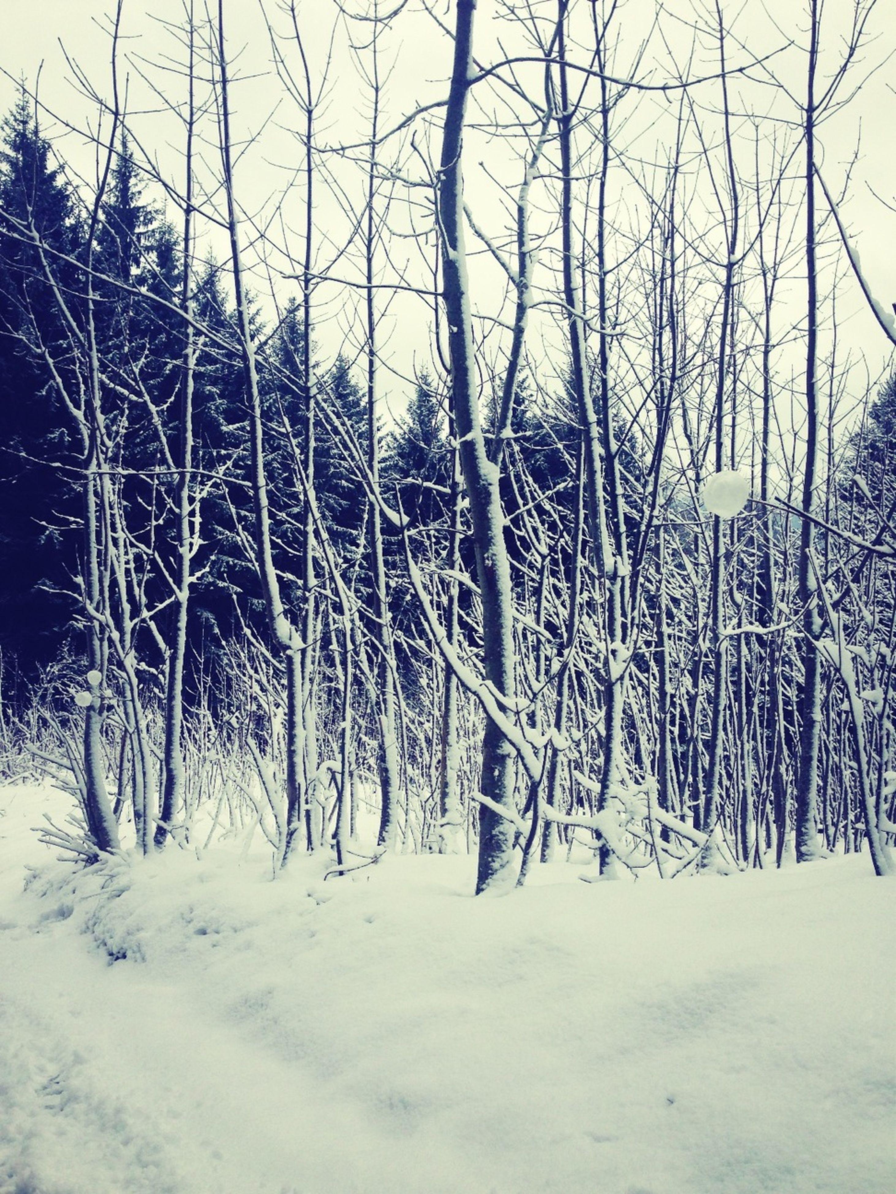 tree, snow, winter, cold temperature, bare tree, tranquility, branch, tranquil scene, nature, landscape, scenics, beauty in nature, growth, tree trunk, non-urban scene, season, covering, field, sky, day