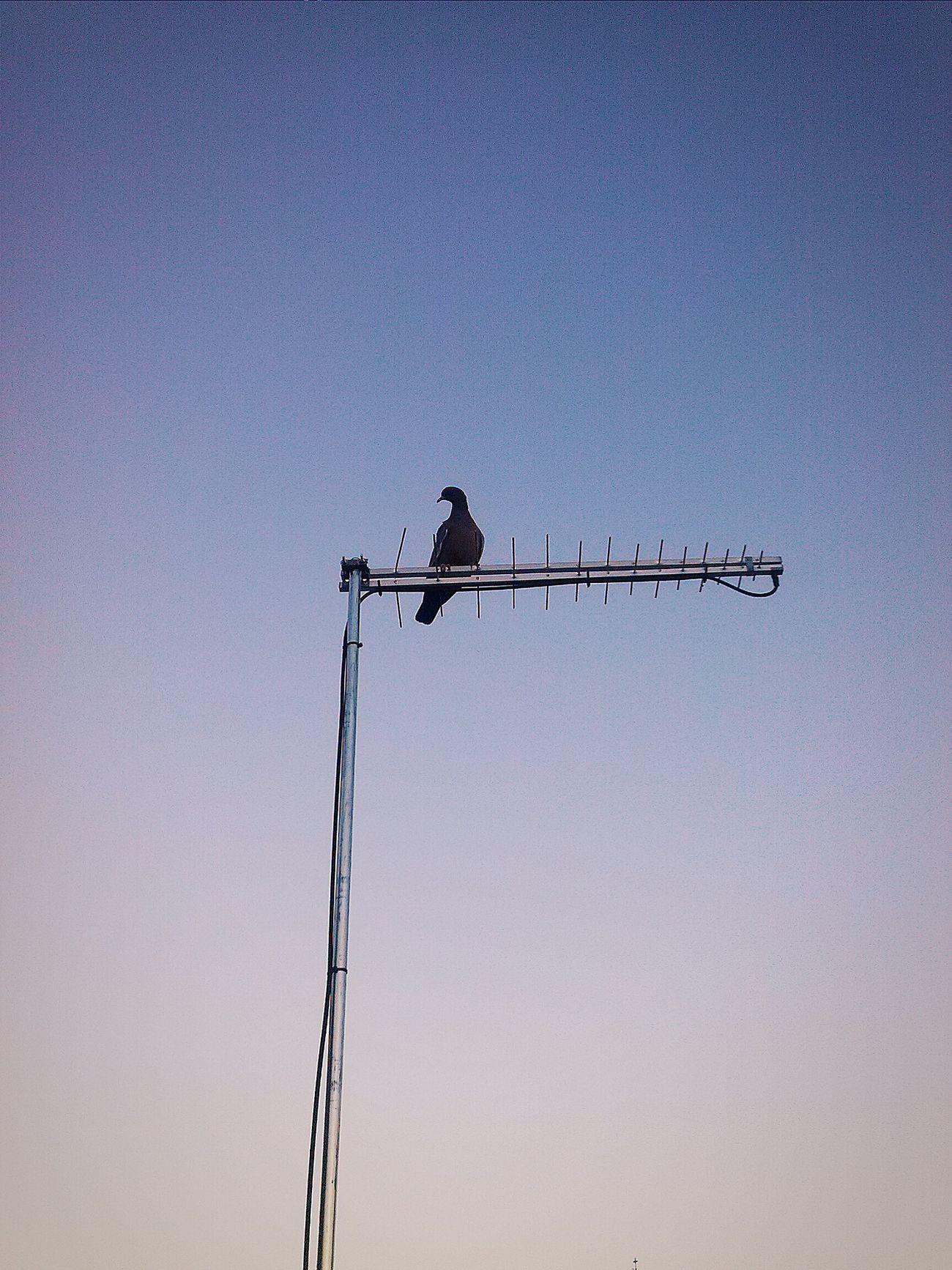 Dove. Flybea