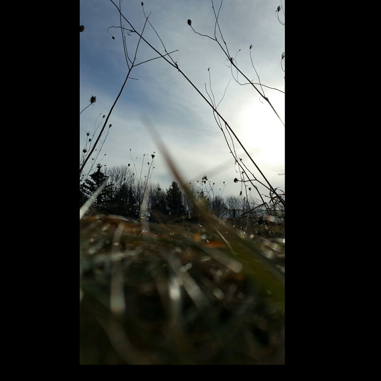 transparent, glass - material, window, sky, weather, nature, wet, transportation, windshield, no people, looking through window, day, reflection, cold temperature, outdoors, winter, tree, close-up, bare tree, water, fragility, beauty in nature, freshness