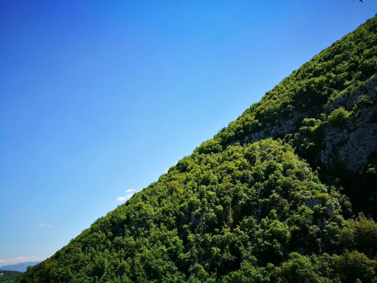 Low Angle View Of Tree In Forest Against Clear Blue Sky