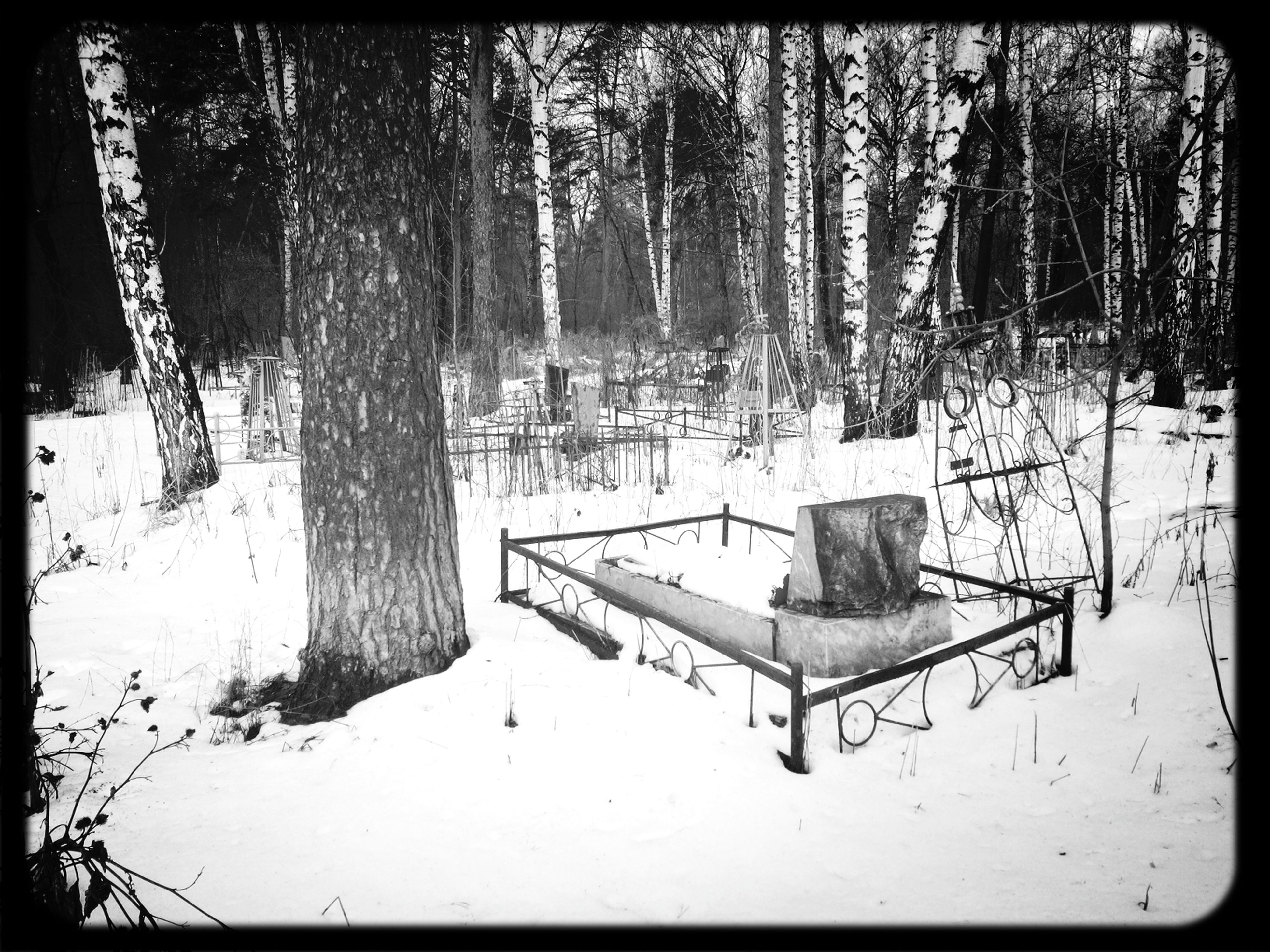 snow, winter, cold temperature, transfer print, tree, season, auto post production filter, covering, weather, tree trunk, nature, tranquility, wood - material, bench, covered, white color, day, absence, frozen, outdoors