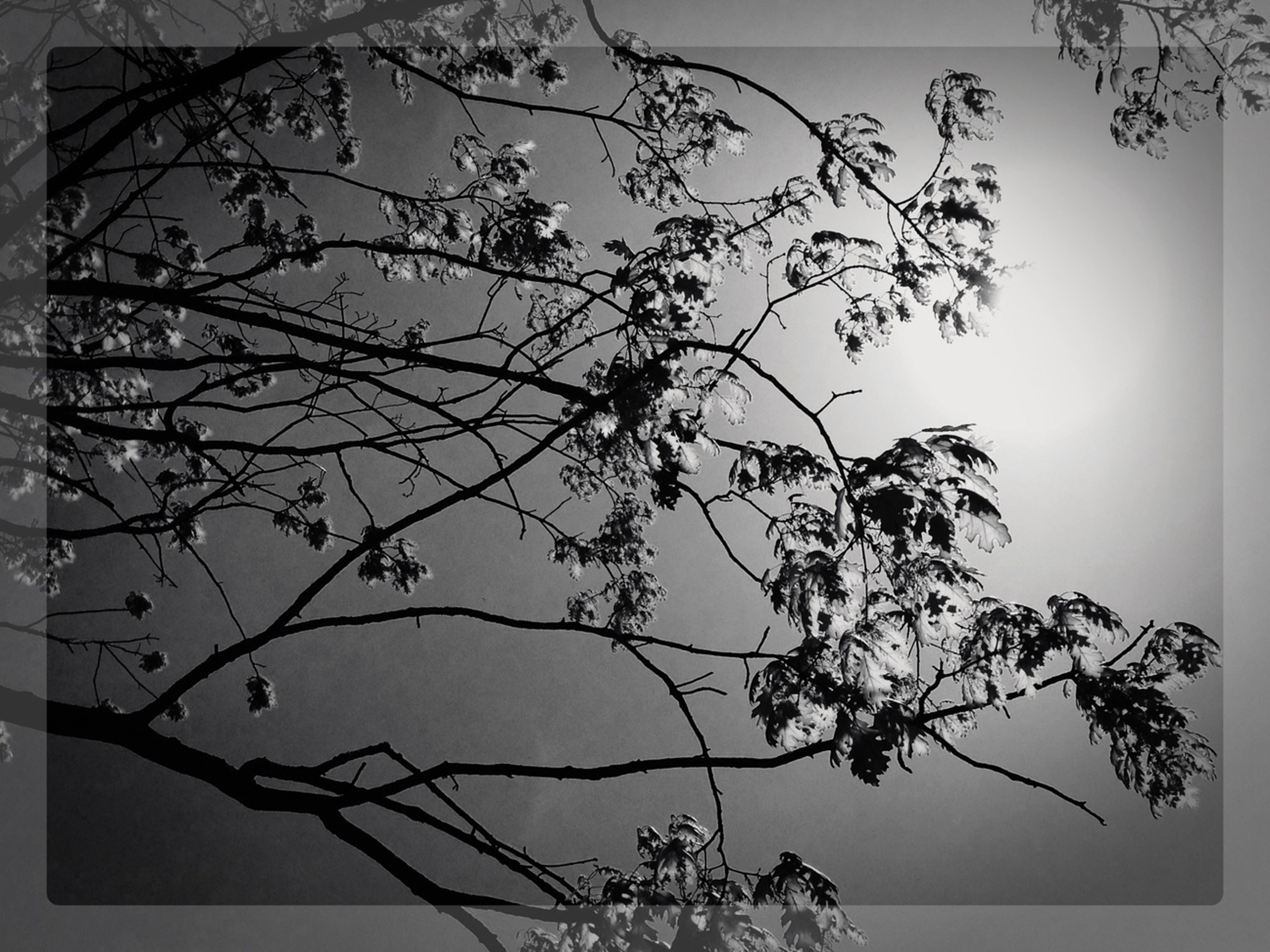 transfer print, branch, auto post production filter, bare tree, tree, nature, clear sky, growth, low angle view, tranquility, sky, silhouette, beauty in nature, twig, plant, outdoors, no people, dead plant, dusk, vignette
