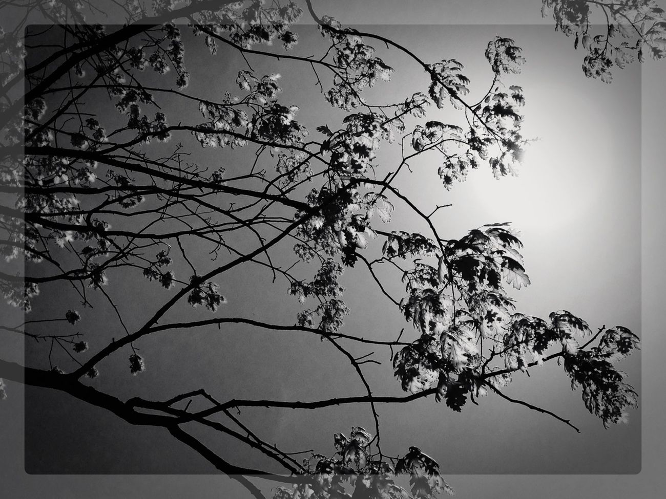 Nature Blackandwhite Trees AMPt_community