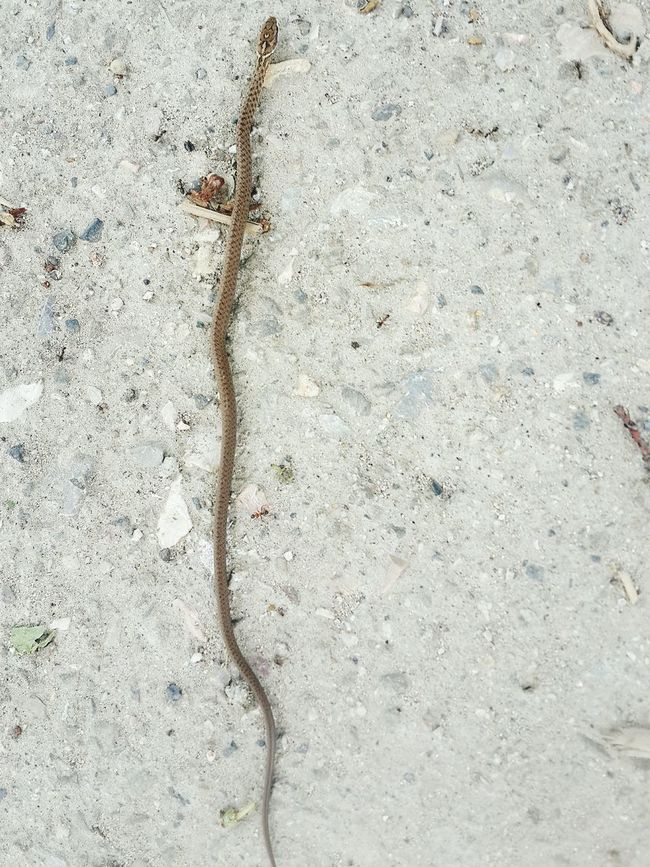 Jst saw a ...Baby Snake @Home Cute