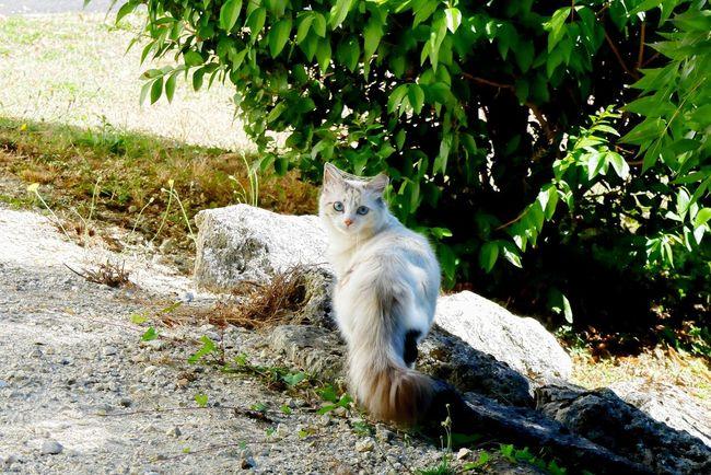CHATFIE Catfie Cat's Eyes Cats Of EyeEm Cat Chat Mon Ami Le Chat