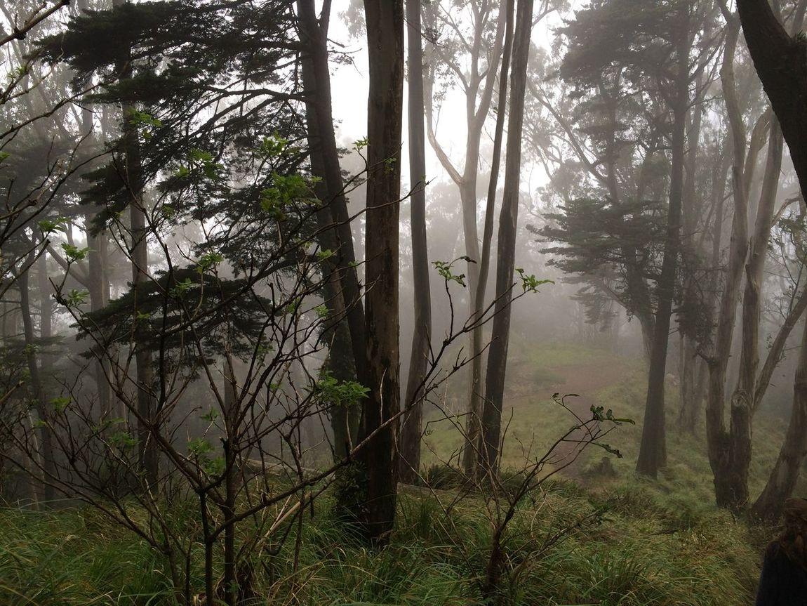 Hidden forest First Eyeem Photo