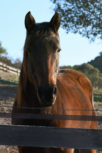 Horses in Morning Light Animal Head  Animal Themes Animals In The Wild Brown Clear Sky Close-up Day Domestic Animals Horse Livestock Looking At Camera Mammal Nature No People One Animal Outdoors Portrait Sky Standing