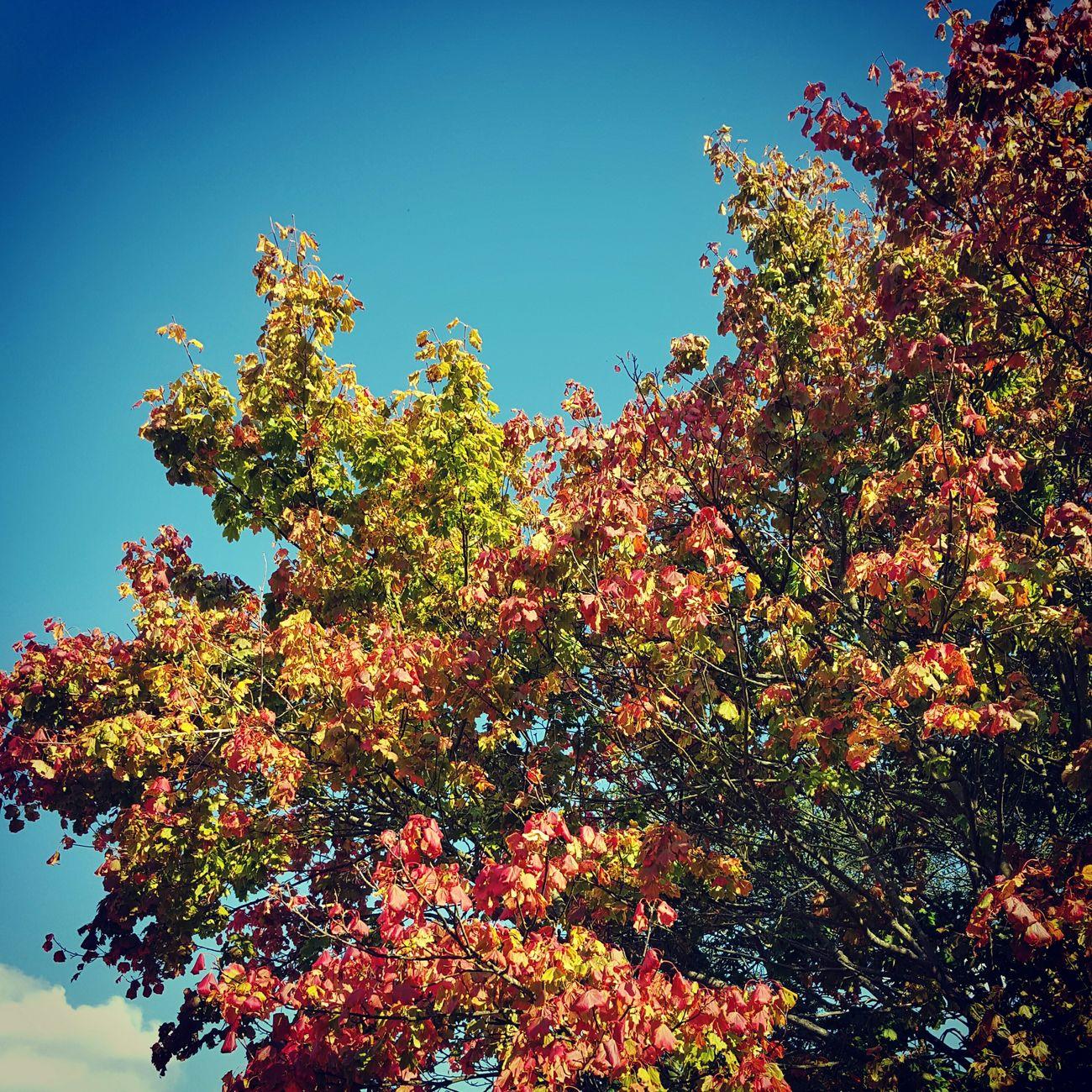 Fall Beauty Autumn Colors Changing Seasons