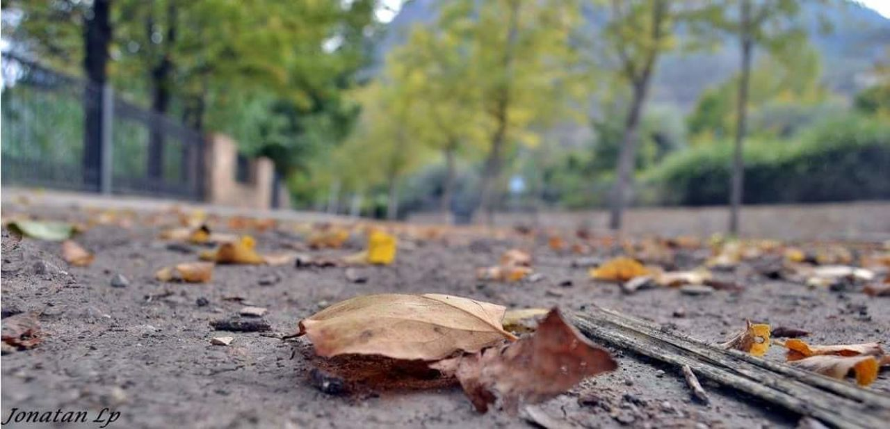 autumn, leaf, change, dry, outdoors, day, nature, no people, tree, close-up, fragility, beauty in nature