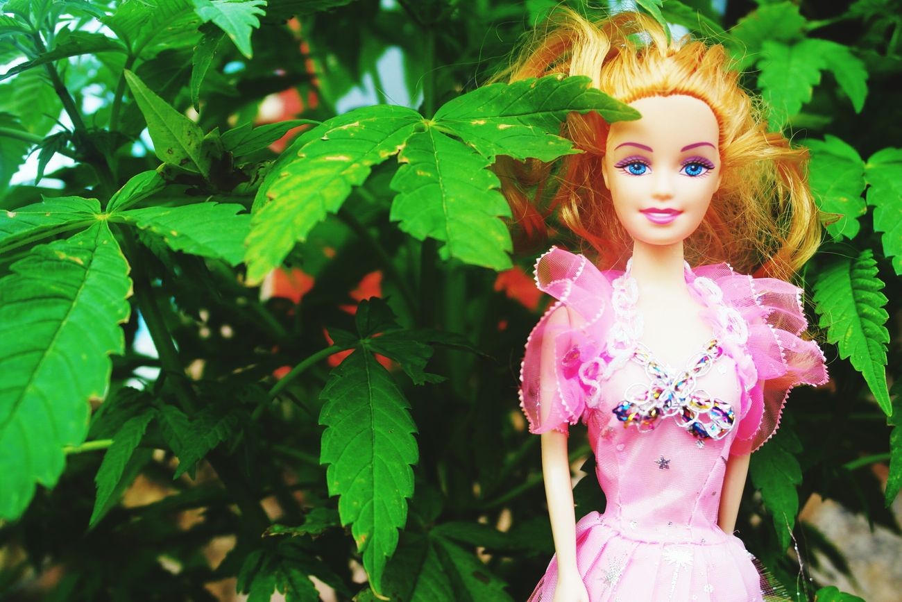 Barbie Girl Barbie World Weed Life ✌👯💁🌸🌴