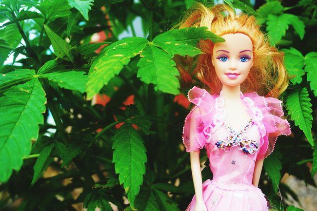 Barbie Girl Barbie World Weed Life ✌👯💁🌸🌴