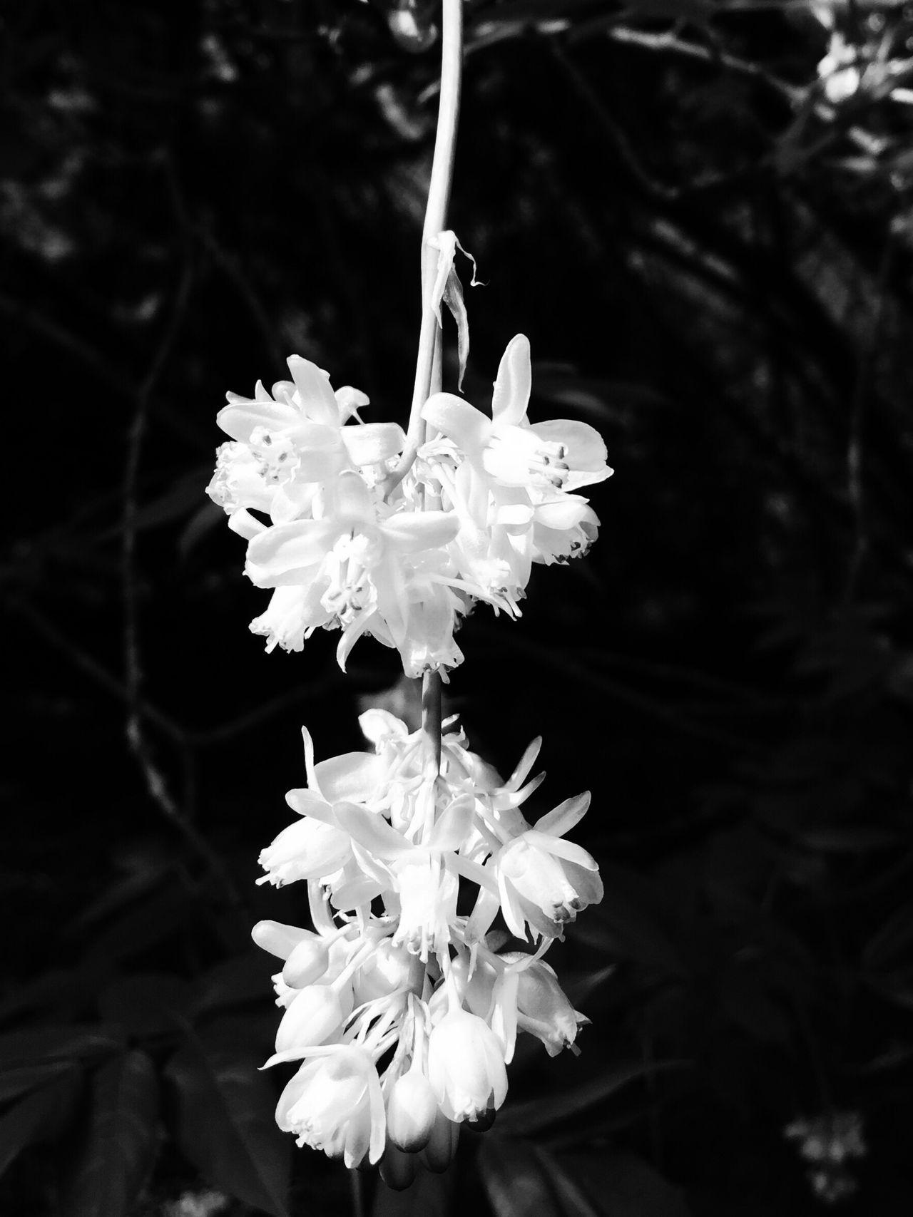 Nature Flower Landscape Noir Blackandwhite Outdoors Taking Photos OpenEdit VSCO IPhoneography