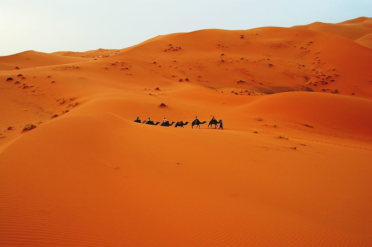 Slow walking Desert Morocco Marruecos Erg Chebbi Camel Service Animals Edge Of The World Deserts Around The World Dunes Traveling The Tourist The KIOMI Collection