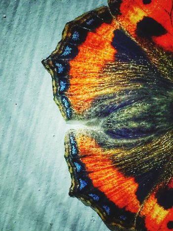Close up of a Tortoiseshell butterflie's wings Nature Beauty In Nature Close-up Tortoiseshell Butterfly Butterflies Wings