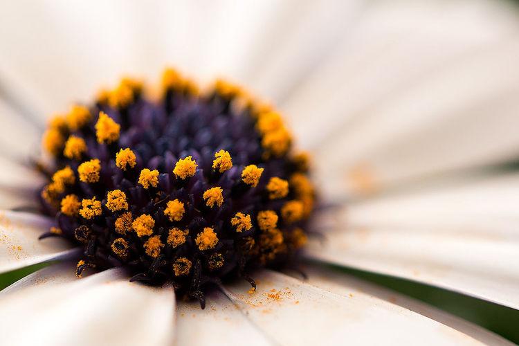 Close-up Flowerhood Flowers Focus On Foreground Gardenflower Macro Orange Color Petal