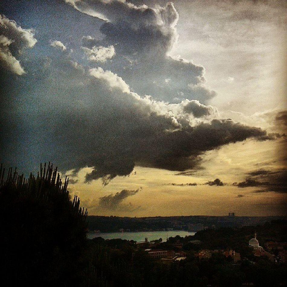 Bagustu Beykoz Istanbulbogazi Tarabya bu çam benimle aynı yaşta!