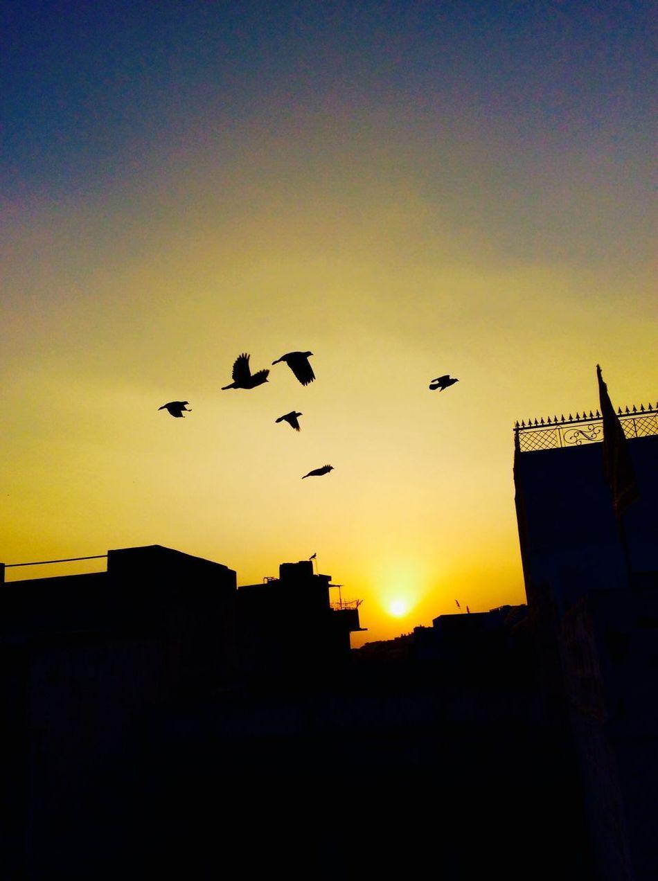IPadography Birds Migration Sunset
