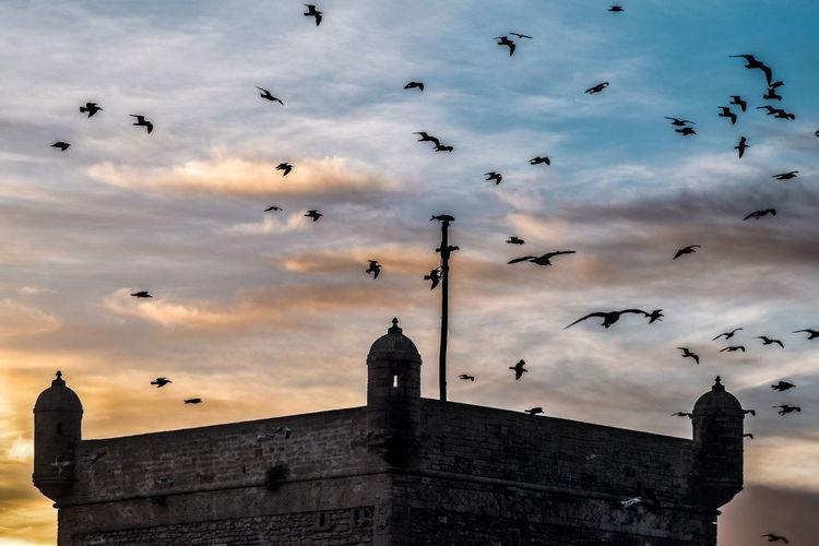 Colors Colorsplash Gabbiano Marocco Morocco Morocco Beauty Nuvole Stormiscoming Taking Photos Torre Di Guardia Torres Torres Costeras Torres De Vigía Tramonto Tramonto;sole;cielo Uccelli Vedette Volatili