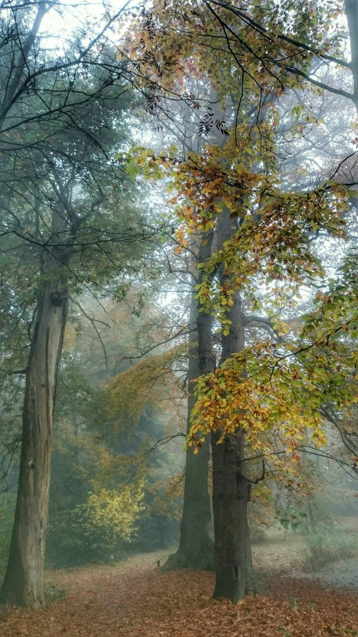 tree, nature, branch, autumn, tree trunk, growth, beauty in nature, leaf, scenics, tranquility, tranquil scene, outdoors, day, forest, landscape, no people