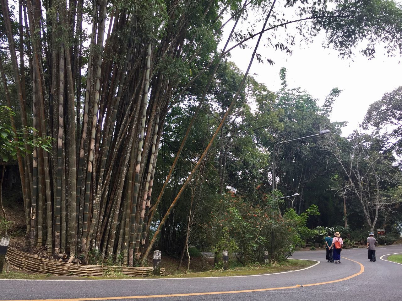 tree, road, street, outdoors, day, transportation, real people, growth, men, two people, nature, full length, sky, people