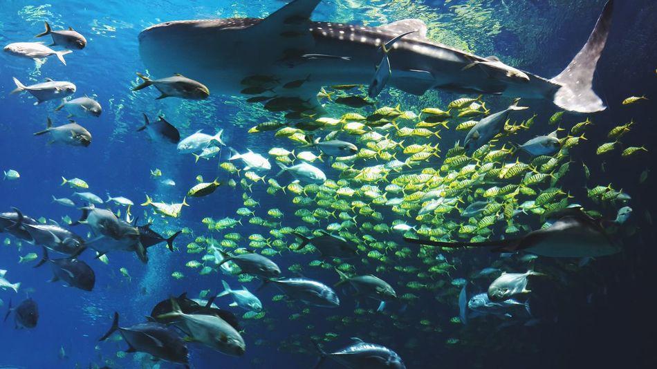 Aquarium Traveling Animals Fish Ocean