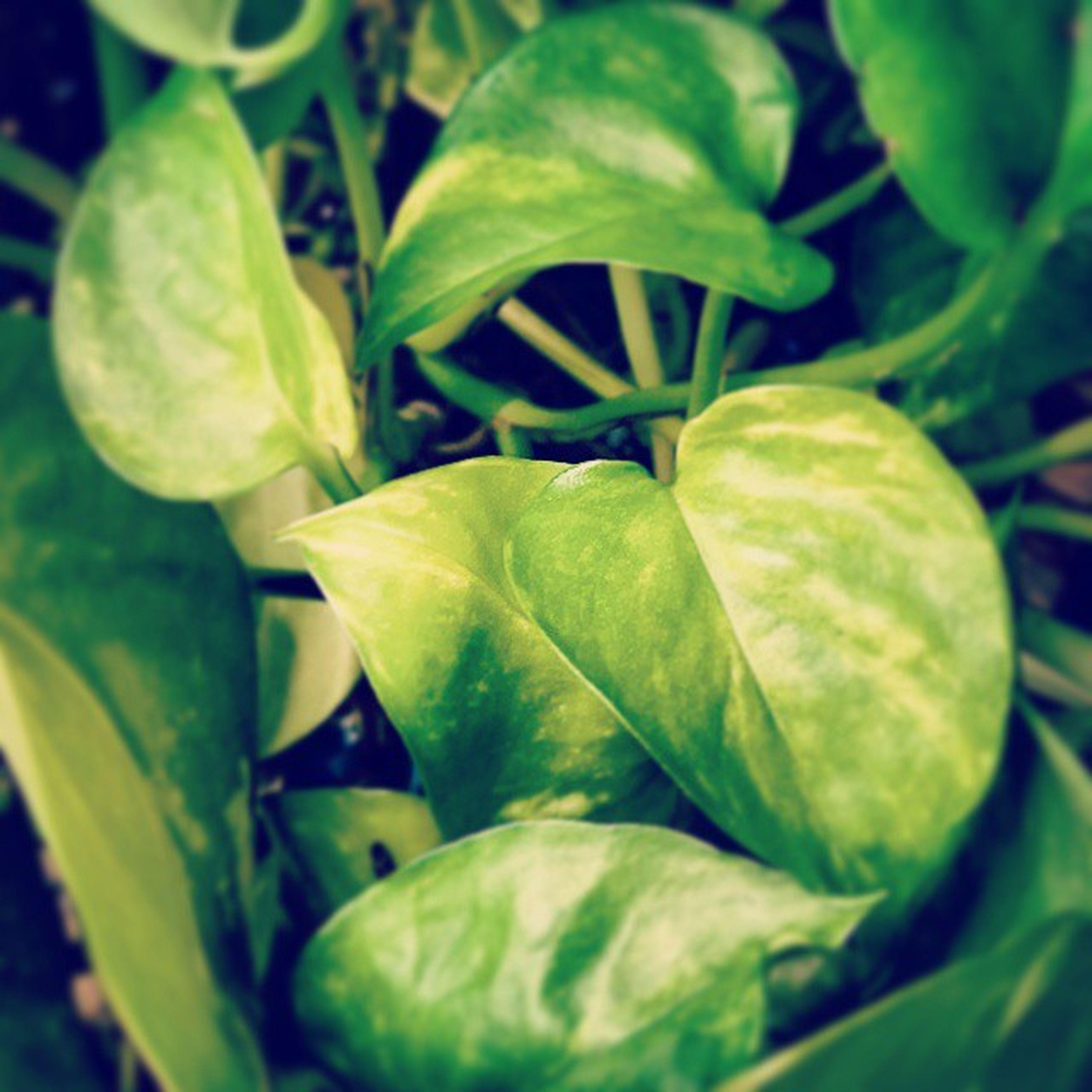 green color, leaf, freshness, growth, close-up, plant, healthy eating, food and drink, green, nature, food, vegetable, beauty in nature, leaf vein, no people, leaves, selective focus, high angle view, organic, fruit