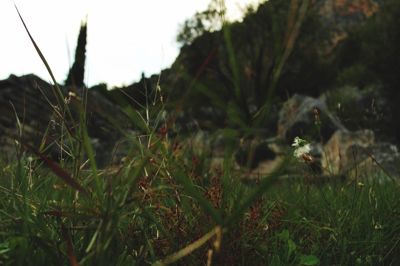 Growth Nature Grass Outdoors Field No People Day Plant Close-up Happiness Hellas Green , Greece Delphi