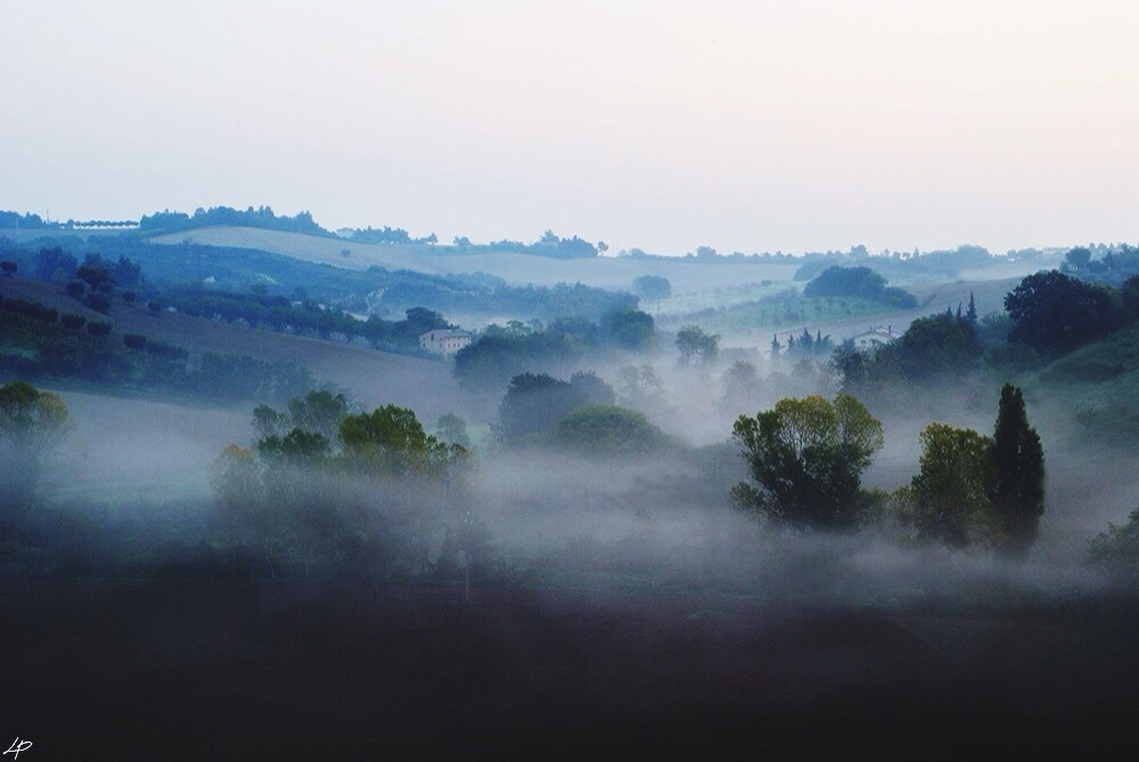 fog, tranquil scene, foggy, tranquility, scenics, beauty in nature, mountain, tree, landscape, nature, weather, mist, copy space, non-urban scene, sky, idyllic, mountain range, outdoors, growth