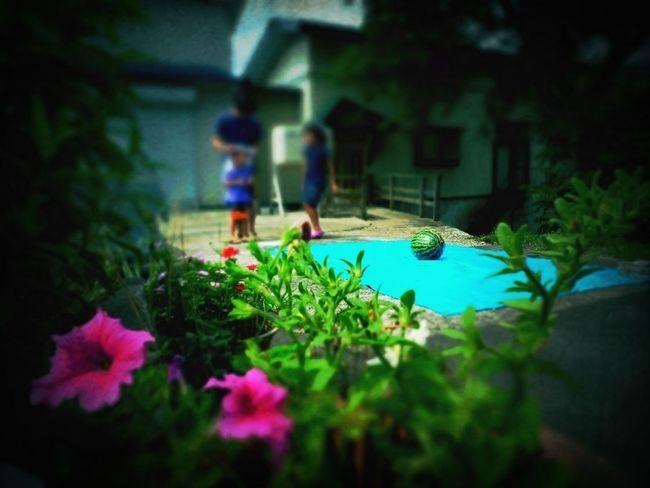 """夏 """"suika Wari"""" スイカ割り Memories In The Summer"""
