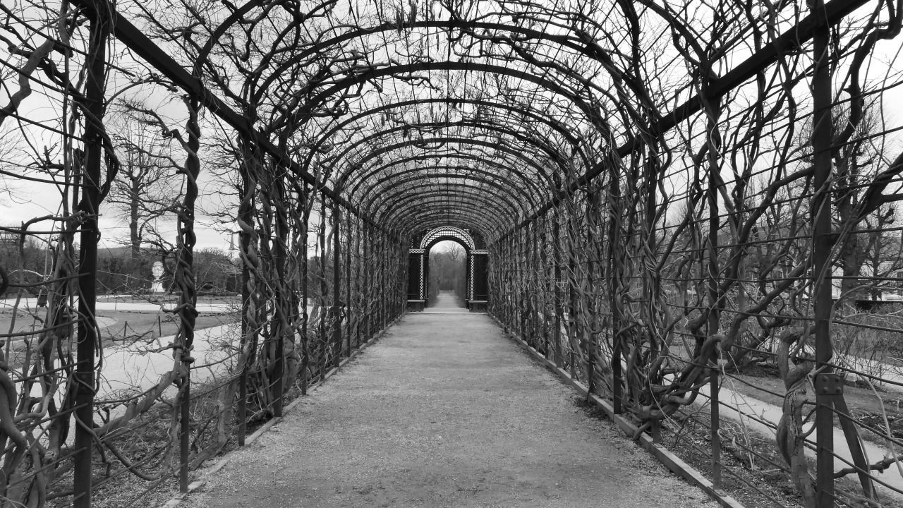 arch, the way forward, diminishing perspective, bare tree, day, built structure, architecture, history, no people, tree, outdoors, nature