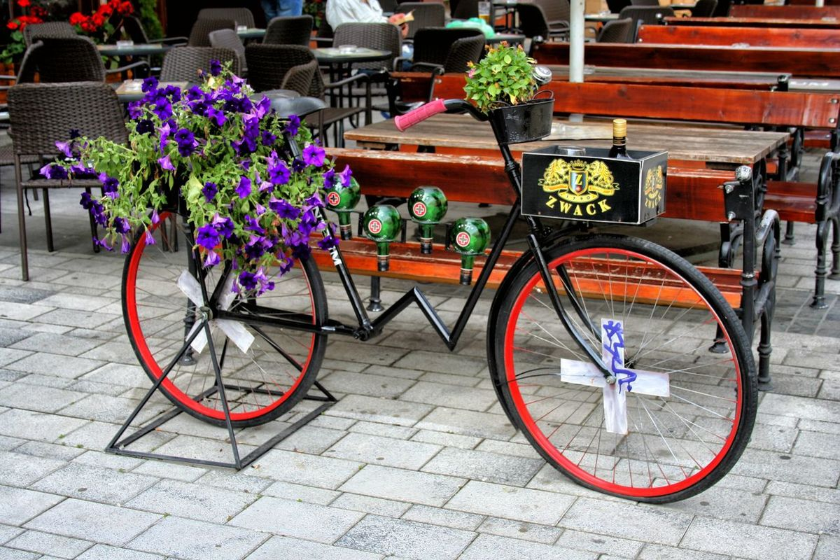 Antique Bike Beauty In Nature Day Flower Multi Colored Nature No People Outdoors Pink Color