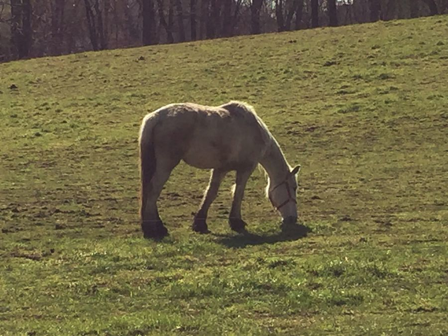 Horse Farm Equine Equestrian Grass Grazing Mobile Photography IPhone Photography IPhoneography Iphonephotography Brimfield Afternoon