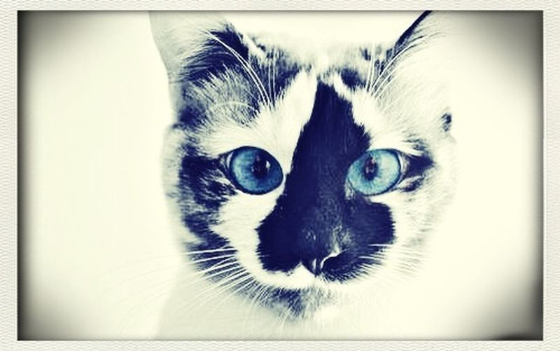 Hi! Check This Out Cats I'm Loving It.