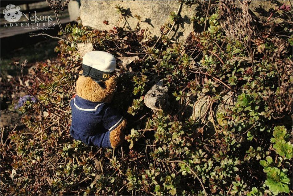 He's always climbing... NelsonsAdventures Nature Teddy Plant