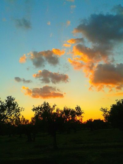Olive Tree Landscape Watching The Sunset Enjoying The View