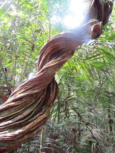 Amazon Amazon Rainforest Amazon River Amazonas Amazonas-Brasil Backlit Beauty In Nature Brazil Close-up Forest Nature At Its Best Nature Up Close Travel The World Tree