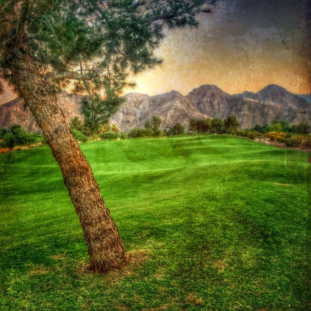 tree, grass, nature, scenics, tranquil scene, beauty in nature, mountain, tranquility, no people, landscape, outdoors, day, field, mountain range, sky, golf course
