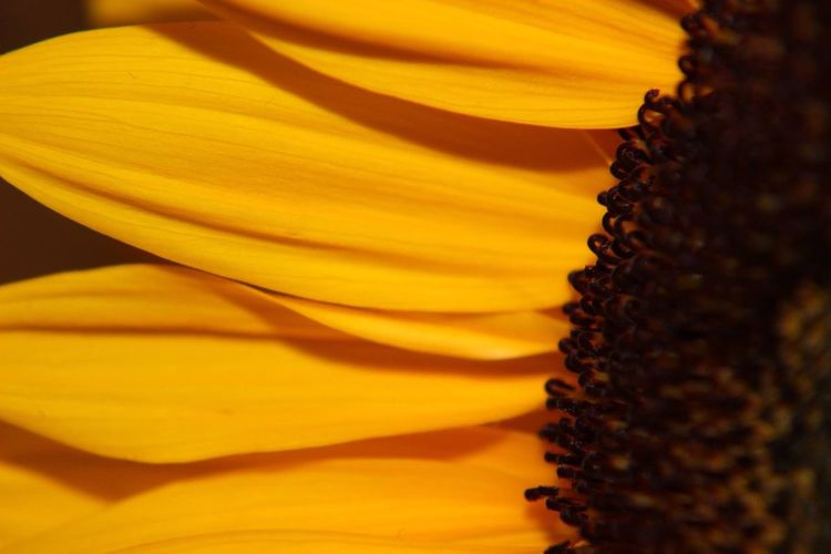 Color Palette Petal Flower Head Close-up Macro Beauty In Nature Flower EyeEmNewHere