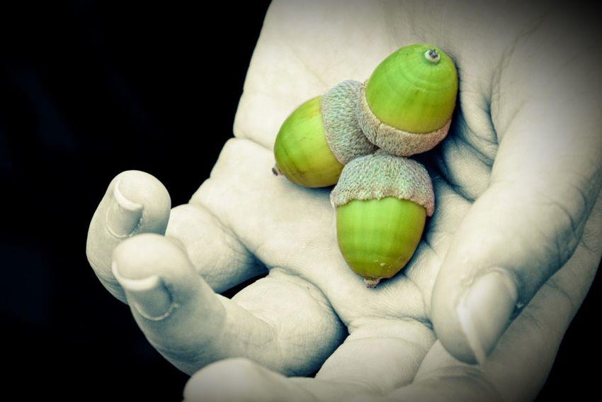 Close-up Green Color Human Body Part Healthy Eating One Person Food Freshness Animal Themes Human Hand Indoors  Day Splashing Splash Of Color Splashgreen. Ghiande Splash_greece_bnw