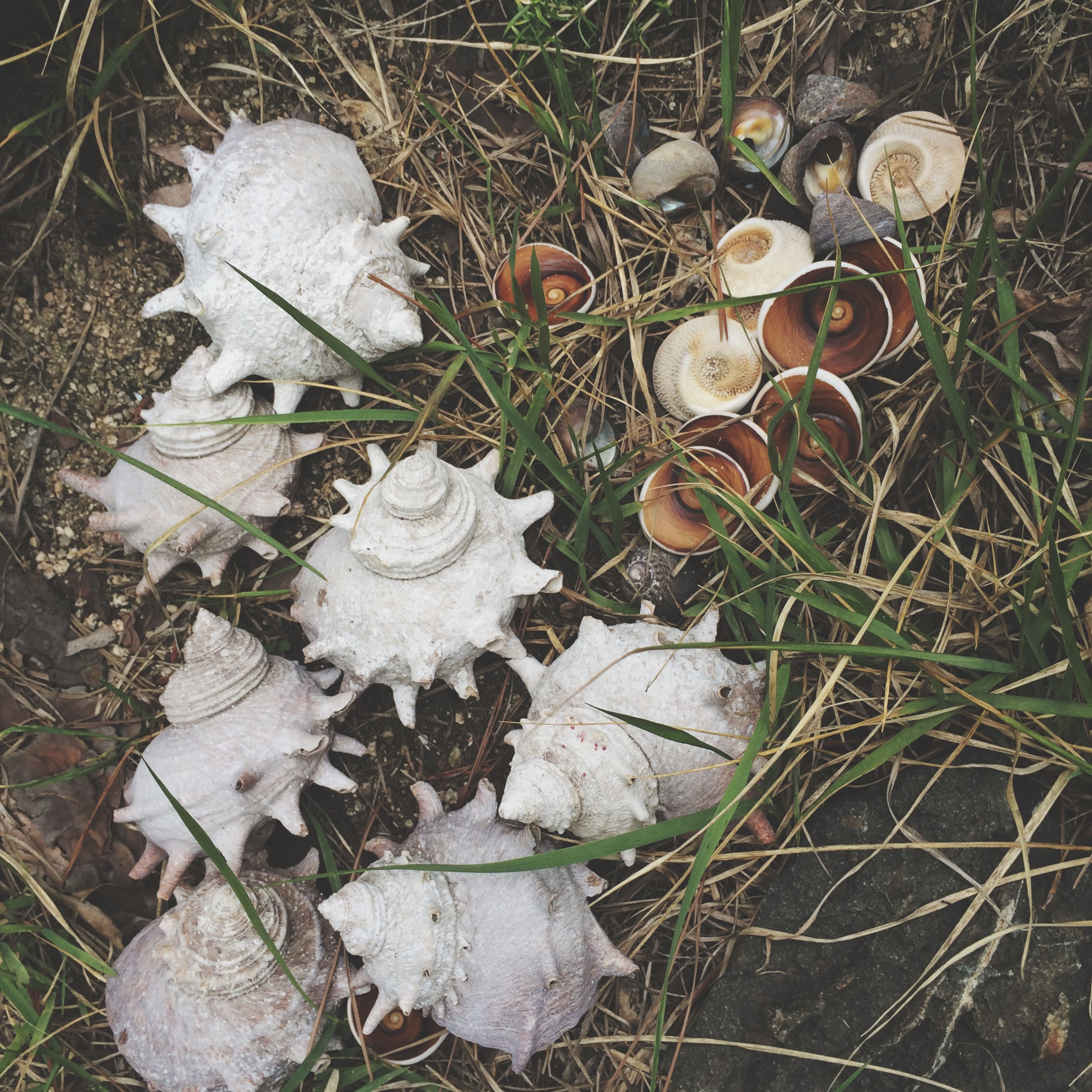 grass, high angle view, mushroom, fungus, field, growth, close-up, dry, leaf, nature, fragility, ground, plant, toadstool, white color, day, abandoned, dirt, outdoors, no people