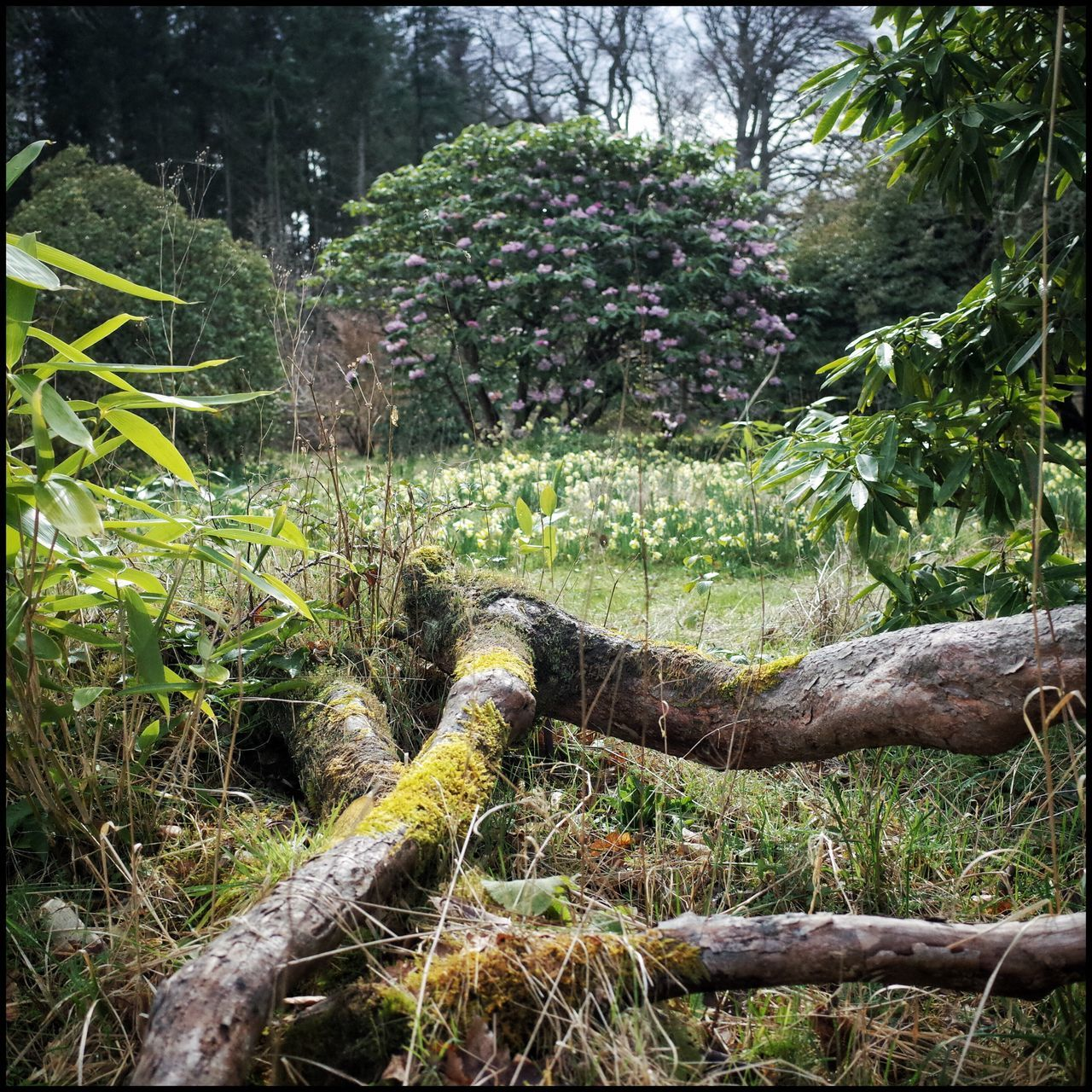 Spring Nature Enjoying Nature Light And Shadow Textures And Surfaces Flaneur Tree_collection  Scotland Design Garden Photography