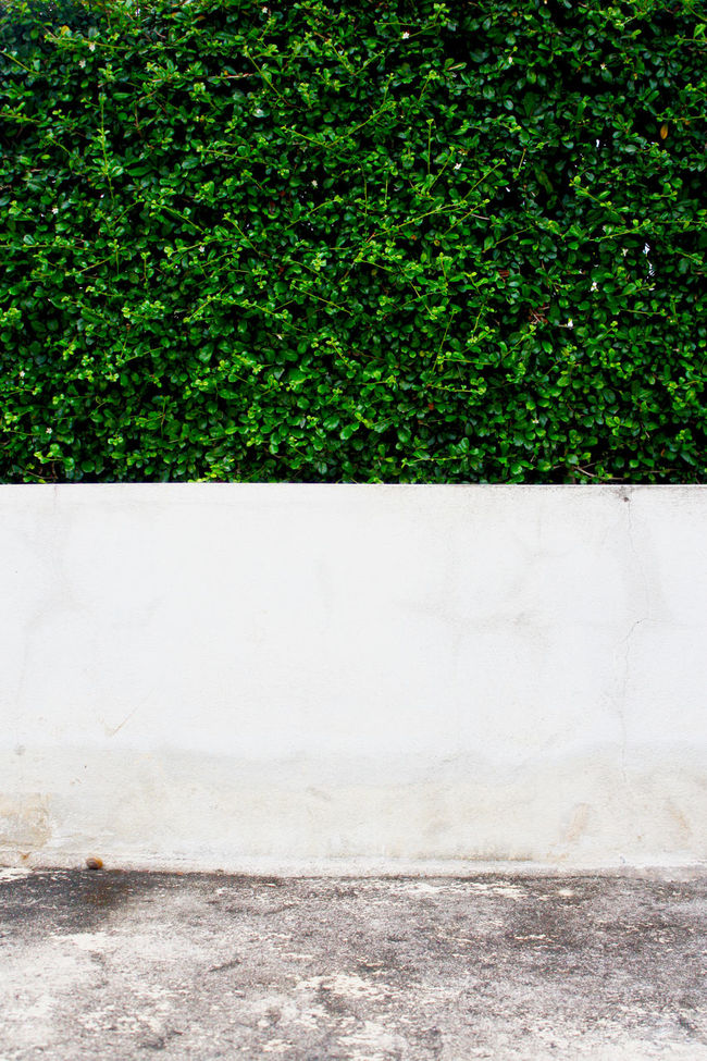 Backgrounds Green Wall Outdoors Texture Textured  Textures Texturestyles Wall Wall Green