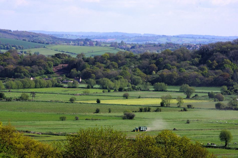 Agriculture Farm Field Landscape Rural Scene Crop  Nature Outdoors Beauty In Nature Sky Scenics Nature Green Color Springtime Somerset Levels Uk Tranquility
